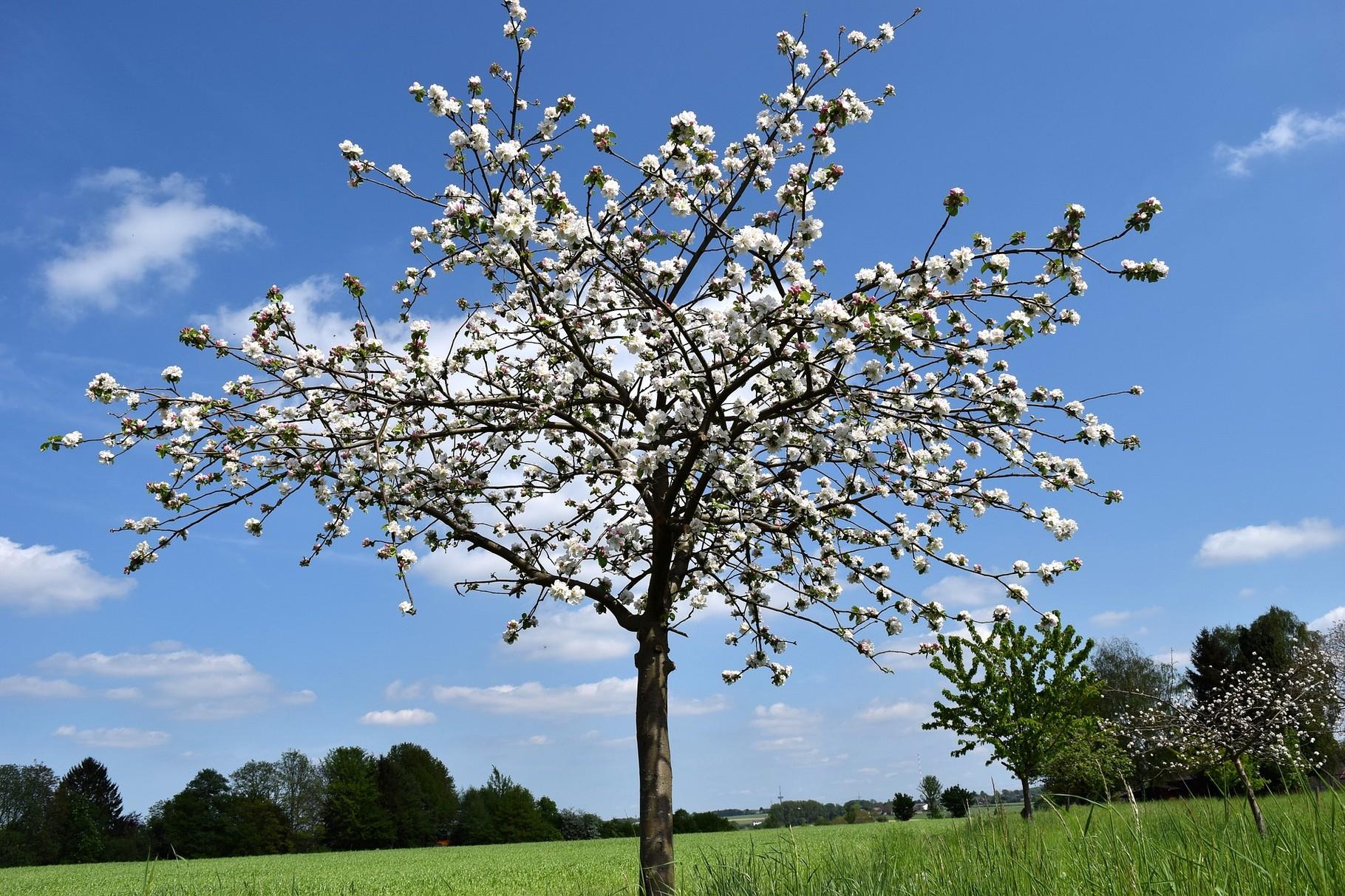 Gartenbau Ansbach unsere kreisfachberater kreisverband für gartenbau landespflege