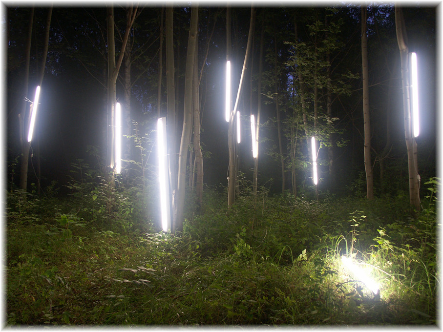 Wald, erleuchtet, Installation, 2005, Wolfgang Wallner, Hall in Tirol