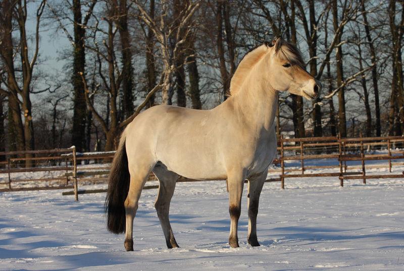 ein stolzes Pferd