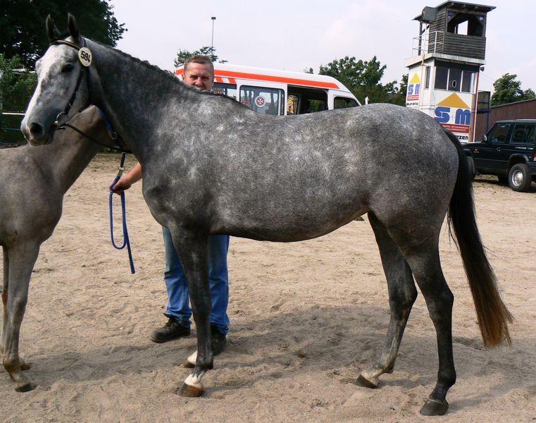 Stuten- und Fohlenschau August 2010