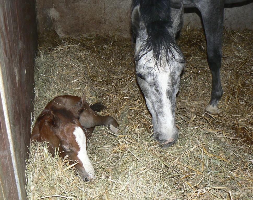 ein paar Stunden nach der Geburt