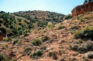 Biotope, Tirhboula, Moyen Atlas central
