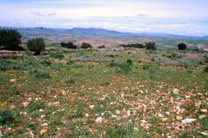 Biotope ouvert, Ouaoumana, Moyen Atlas méridional