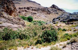 Biotope, Tizi-n-Bachkoum, Anti-Atlas nord-oriental