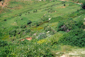 Biotope-type du Nord, région d'Aïn Leuh, Moyen Atlas central