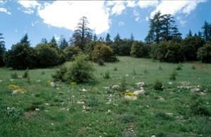 Biotope, Tizi-n-Tretten, Moyen Atlas central