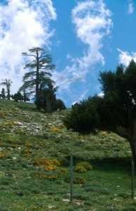 Biotope, Col du Zad, Moyen Atlas central
