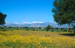 Espace de vol florifère, Aoulouz, Vallée du Souss