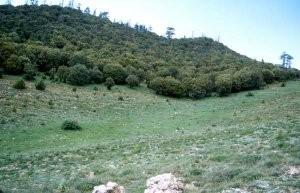 Chênaie verte au Tizi-n-Tretten, Moyen Atlas central