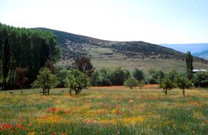 Biotope-type en prairie mésophile, Azrou, Moyen Atlas