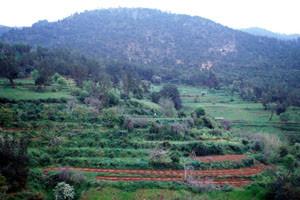Habitat oriental, Monts de Beni-Snassen, Atlas Tellien