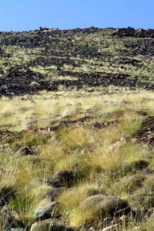 Biotope de l'Adrar Ouhattar, Haut Atlas central