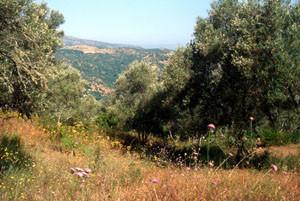 Biotope-type au pays des Beni-Routen, Rif occidental