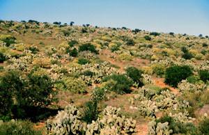 Biotope, Mesti, Anti-Atlas sud-occidental