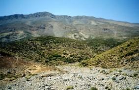 Habitat de la ssp. berber, Djebel Bou-Iblane, Moyen Atlas septentrional