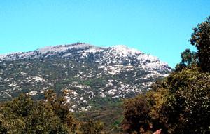 Habitat général de la ssp. rifensis (arrière plan), Djebel Lakraa, Rif occidental