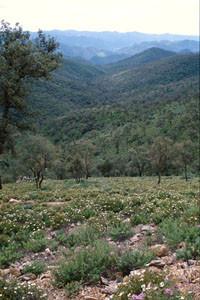 Station en matorral de suberaie à C. allardi occidentalis, El-Harcha, Plateau central
