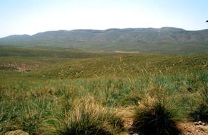 Habitat, nappes alfatières de Faycha, Moyen Atlas central