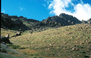 Pente à ssp. punica, Djebel Siroua, Anti-Atlas nord-oriental