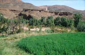 Biotope-type de montagne, Agouim, Haut Atlas central