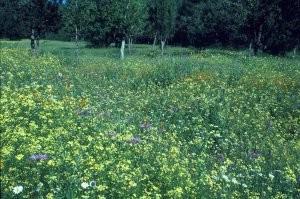 Biotope de lisière en forêt de Tourtite, Moyen Atlas