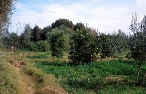 Biotope-type de plaine, Taroudannt, Vallée du Souss
