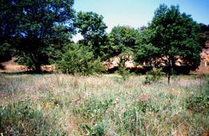 Biotope-type dans le val de l'Oued Tizguid, Moyen Atlas central