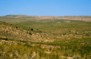 Habitat, nappe alfatière de Faycha, Moyen atlas central
