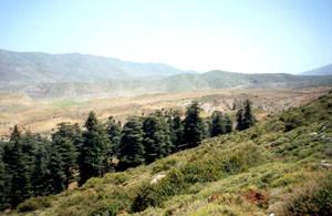 Biotope, Tafferte, Moyen Atlas septentrional