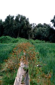 Niche écologique, Aït-Yazza, Vallée du Souss