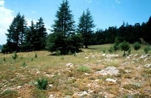 Biotope du Nord, Tizi-n-Tretten, Moyen Atlas central