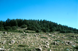 Habitat atlasique, Ifrane, Moyen Atlas central