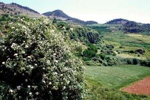 Biotope de la région d'Aïn Leuh, Moyen Atlas central