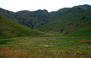 Habitat à ssp. maroccana, Djebel Oukaïmeden, Haut Atlas central