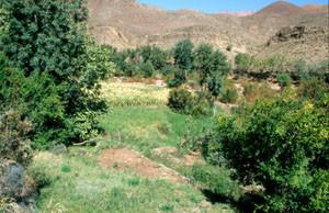 Verger irrigué, Agouim, Haut Atlas central