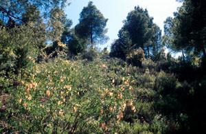 Niche écologique au Tizi-n-Test, Haut Atlas méridional