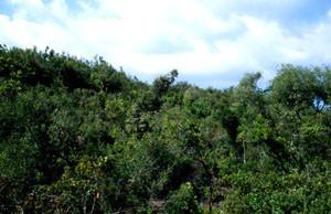 Aire de ponte, Pays des Beni-Routen, Rif occidental