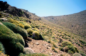 Steppe alticole de la ssp. astrifera, Djebel Azourki, Haut Atlas central