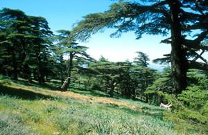 Biotope-type, Djebel Tazzeka, Moyen Atlas septentrional