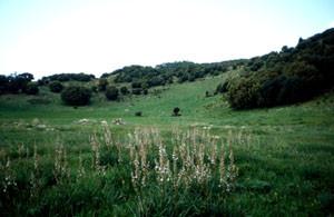 Prairie hygrophile, Ousmaa, Moyen Atlas central