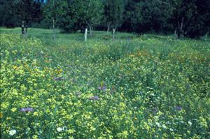 Biotope du Nord (E. belemia distincta), Forêt de Tourtite, Moyen Atlas central