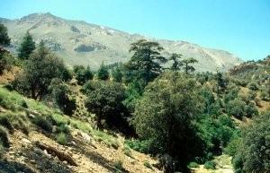 Chênaie verte au Djebel Ayachi, Haut Atlas oriental