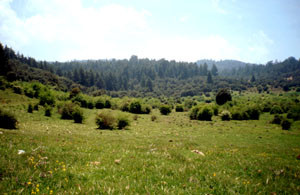 Habitat, Azrou, Moyen Atlas central