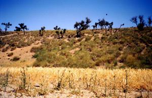 Niche écologique, Aït-Oumghar, Haut Atlas nord-oriental