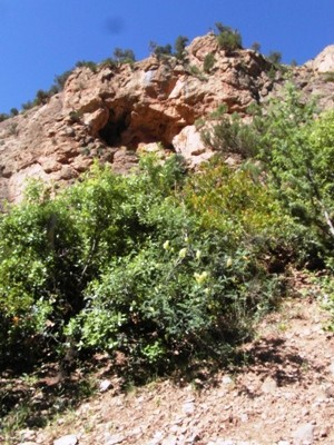 Niche écologique en escarpement dans la Vallée de Ahansal (Photo Frédérique Courtin-Tarrier)