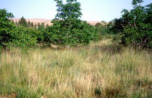 Autre biotope en verger, Midelt, Haut Atlas oriental