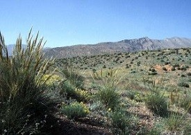 Biotope au printemps, au bord du Djebel Ayachi, Haut Atlas oriental