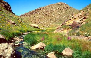 Habitat ripicole dans le Djebel Oukaïmeden, Haut Atlas central