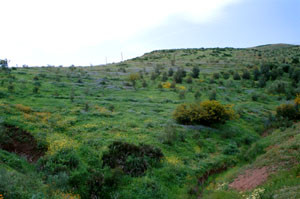Biotope du Nord (E. crameri rifensis) ( Maaziz, Plateau central)