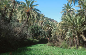 Biotope en oasis, Pays des Ida-Outanane, Haut Atlas occidental